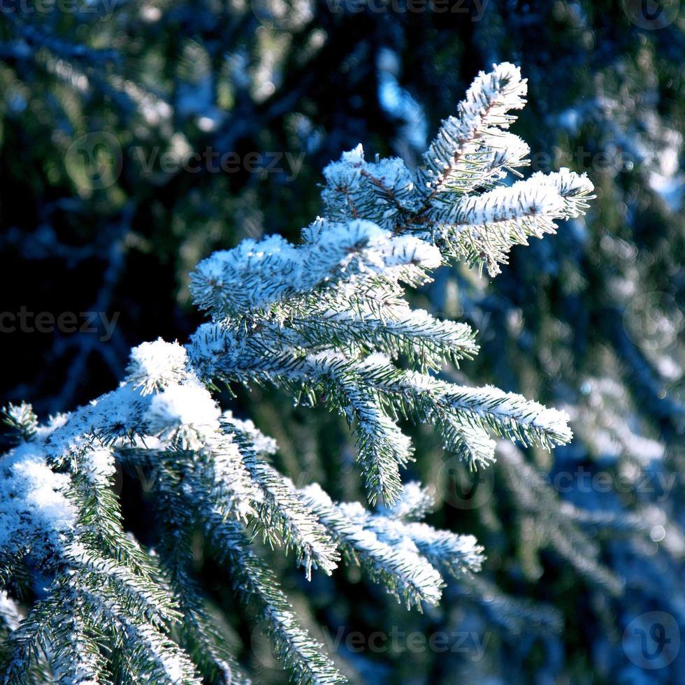 vinter bakgrund, landskap. vinterträd i underland. vinter- foto