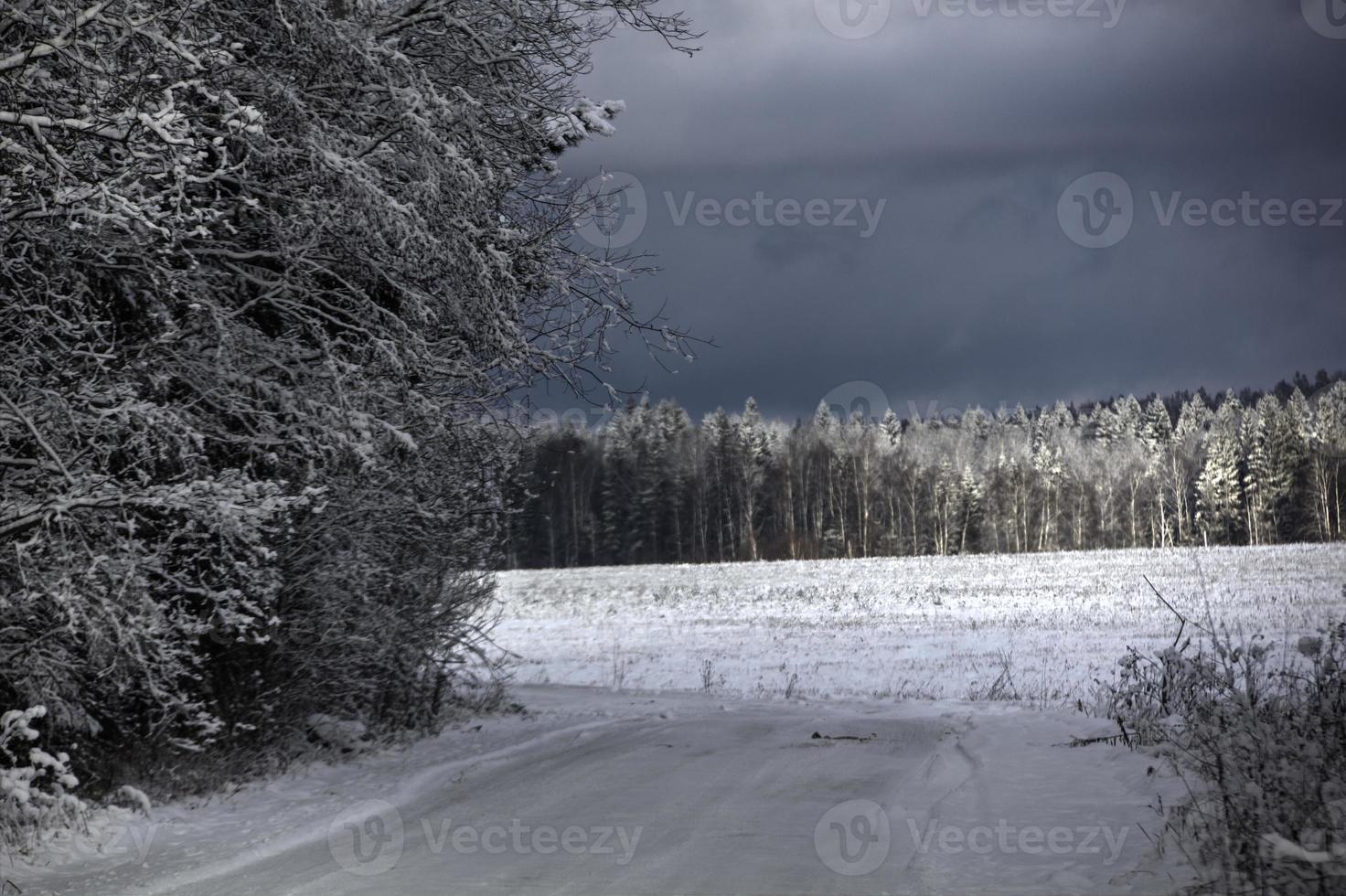 vinterväg. trä. foto