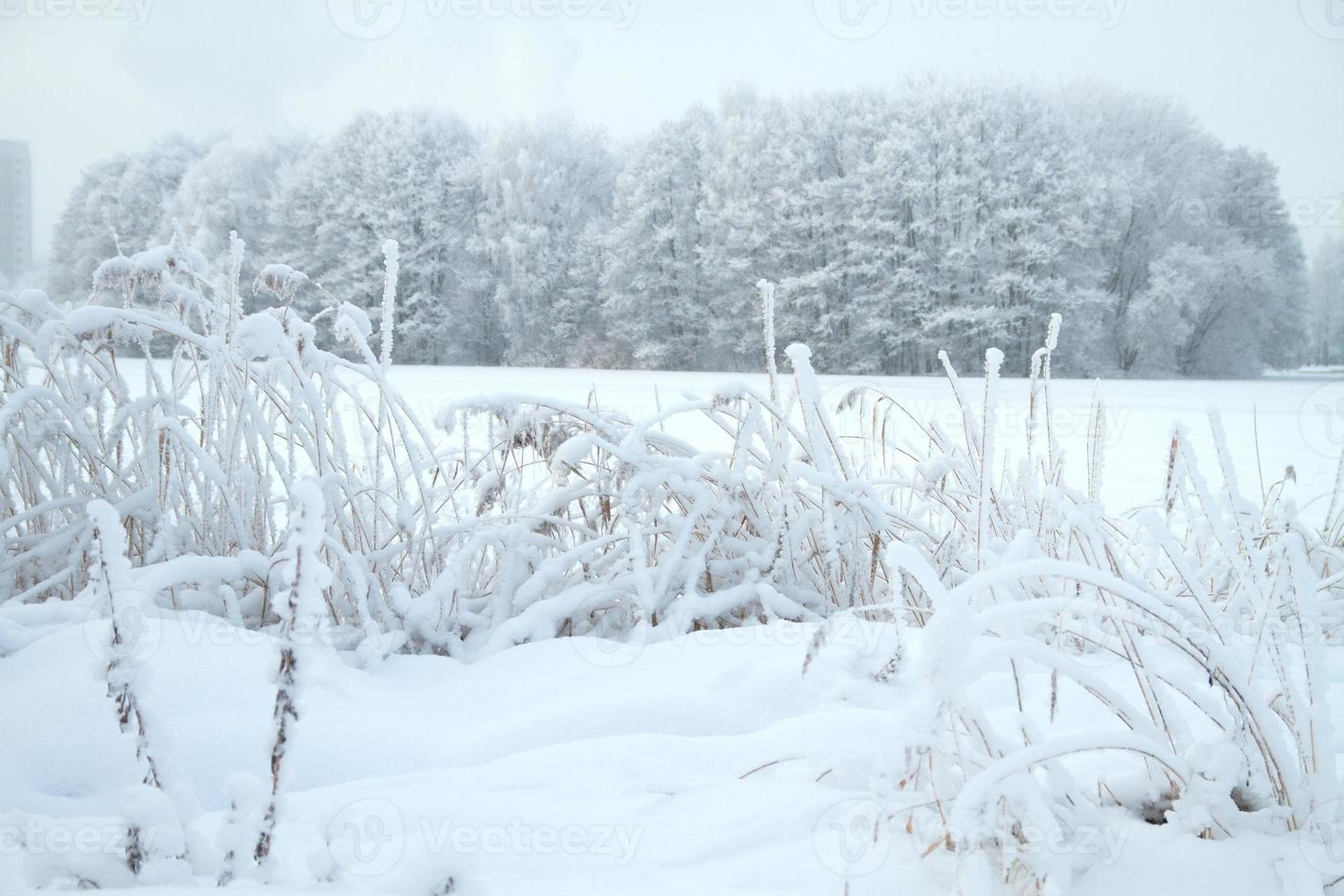 kall vinterskog foto