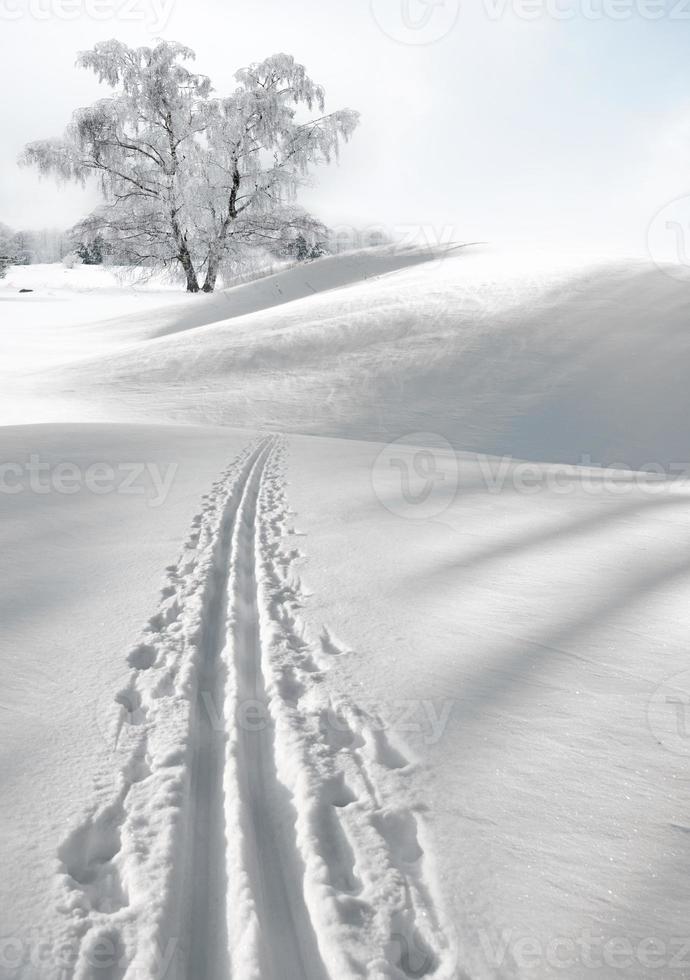 träd på vintern foto