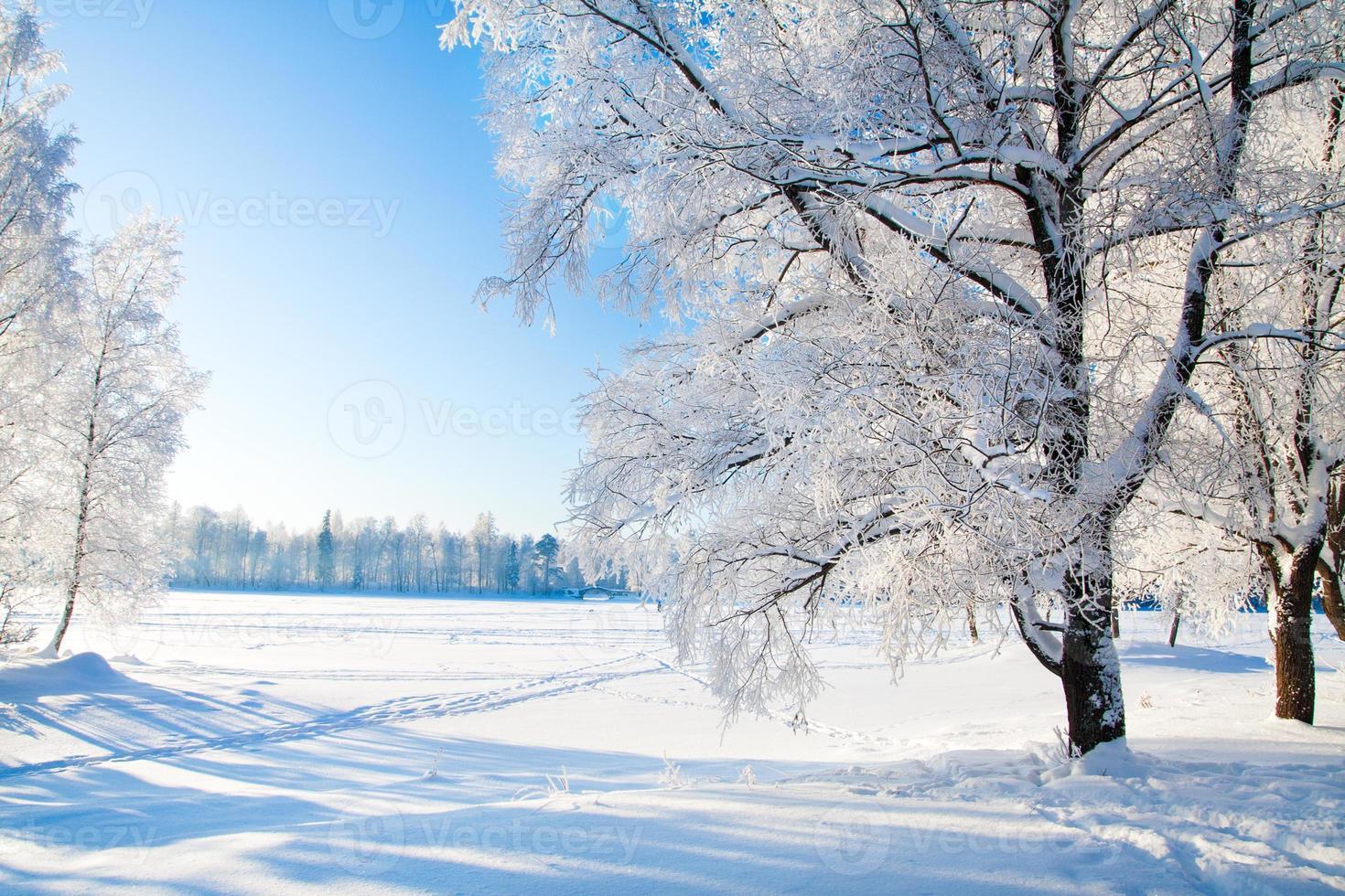 vinterpark i snö foto