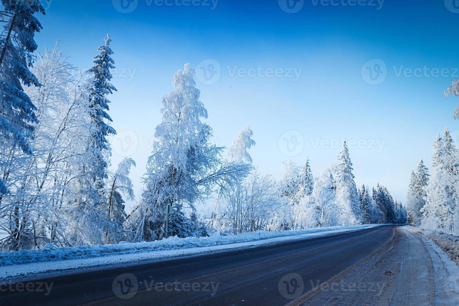 rysk vinterskog i snö foto