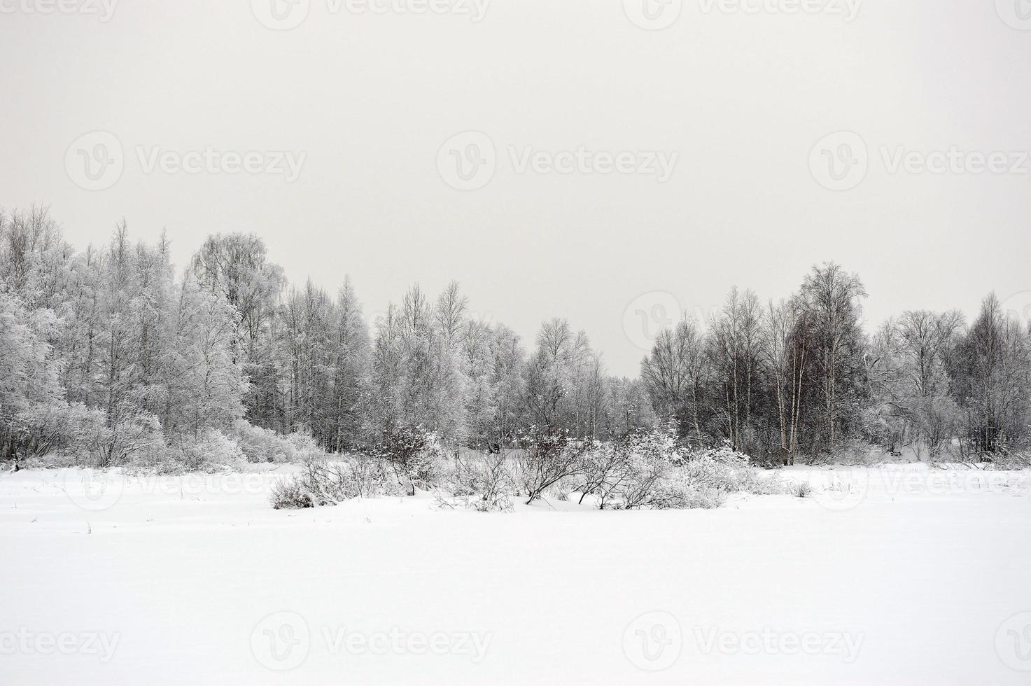 taiga sjön foto