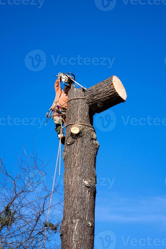 lumberjack iii foto