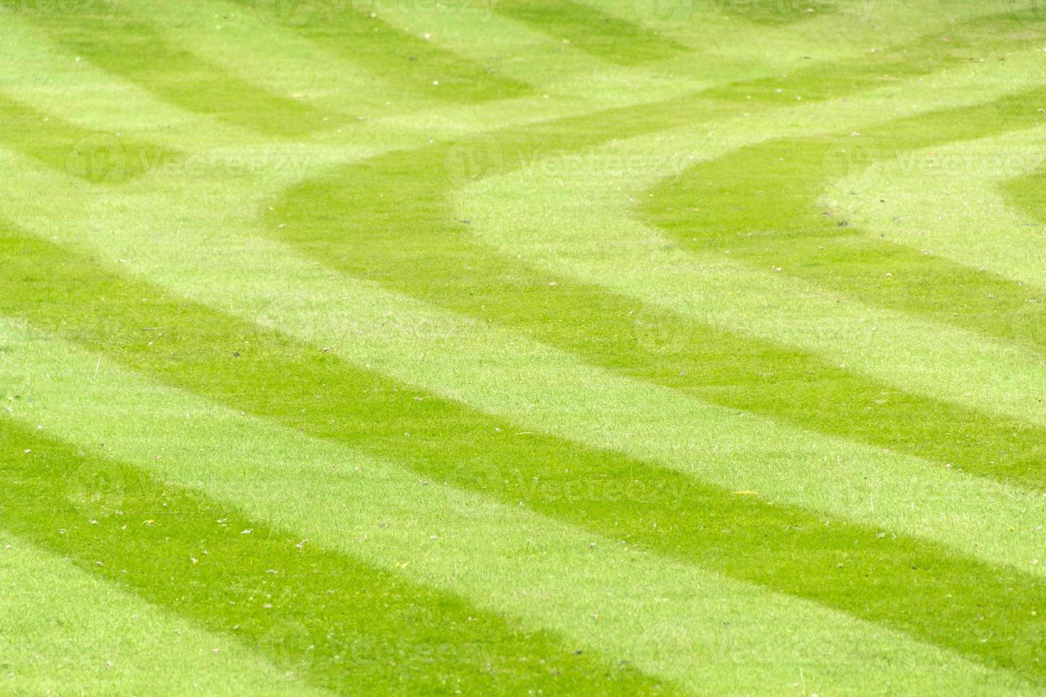 randig gräsmatta foto