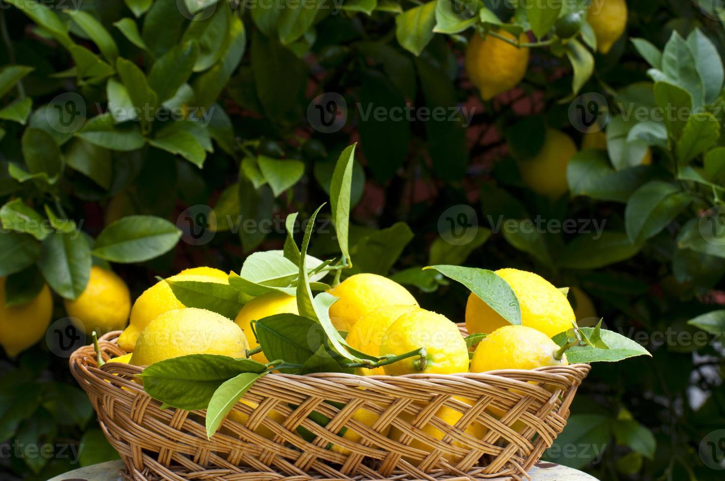 korg med citroner foto