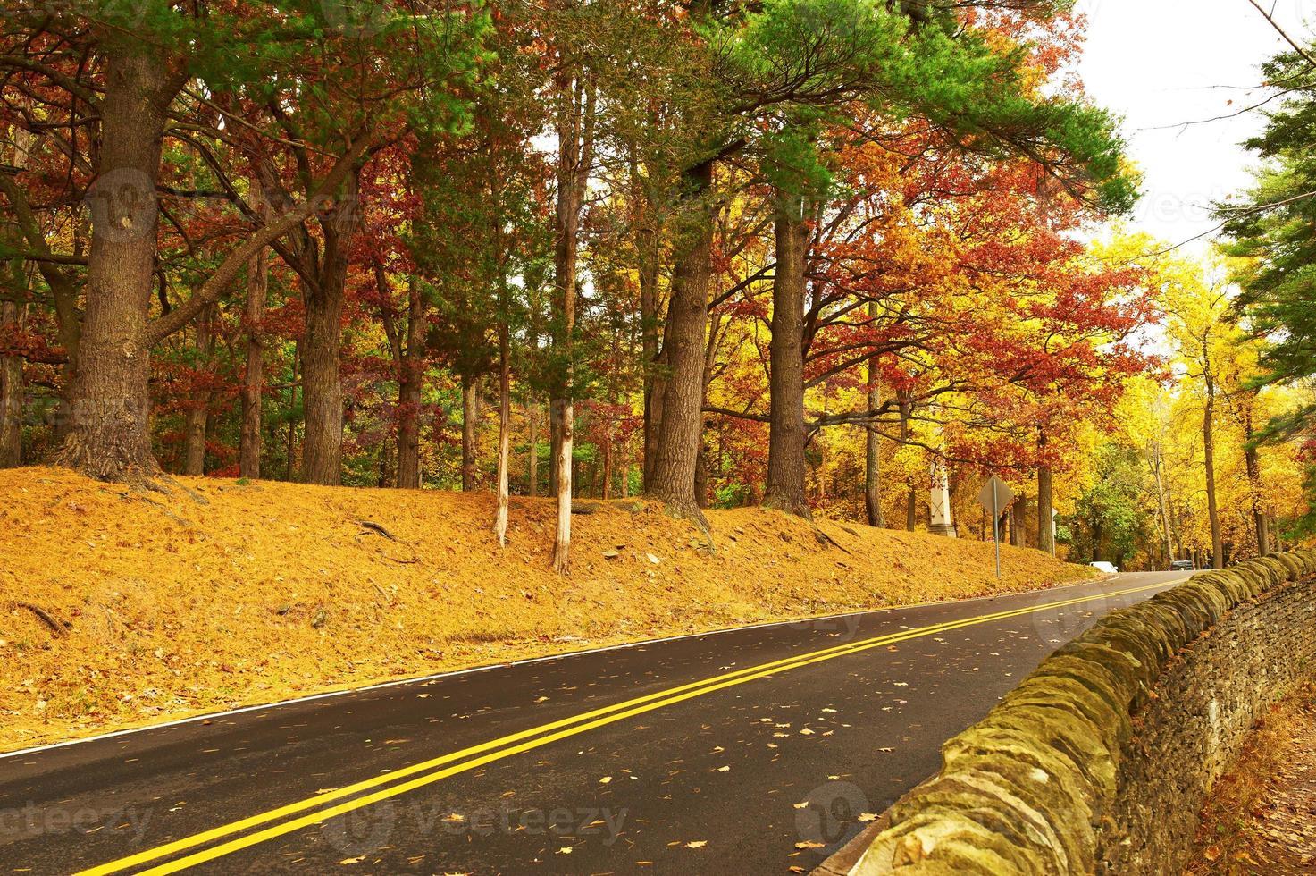 höstplats med väg i skogen foto