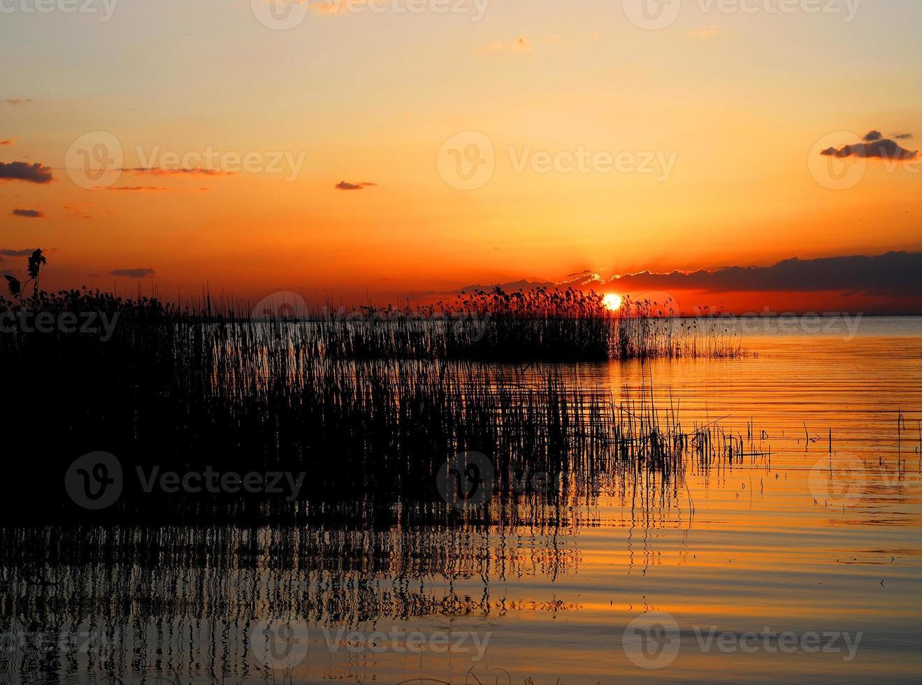 solnedgång på reedy foto