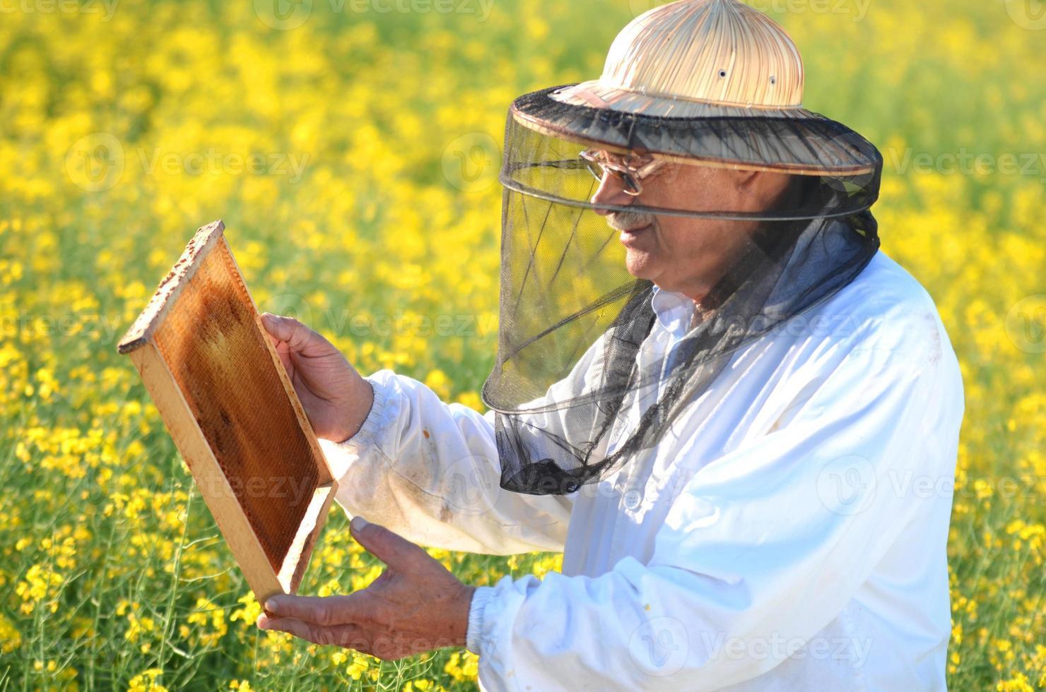 erfaren senior apiarist som arbetar i det blommande rapsfältet foto