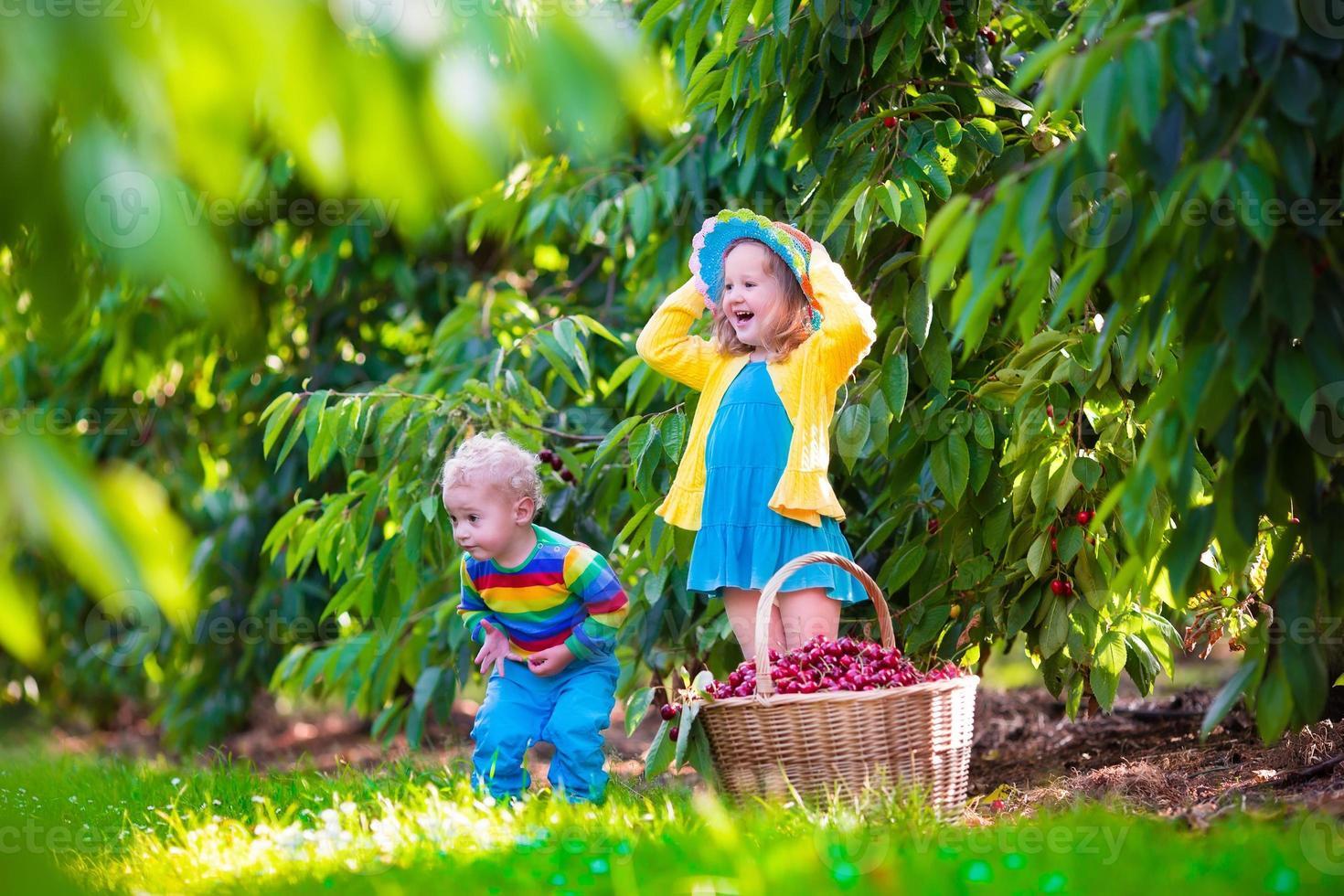glada barn som plockar körsbärsfrukt på en gård foto