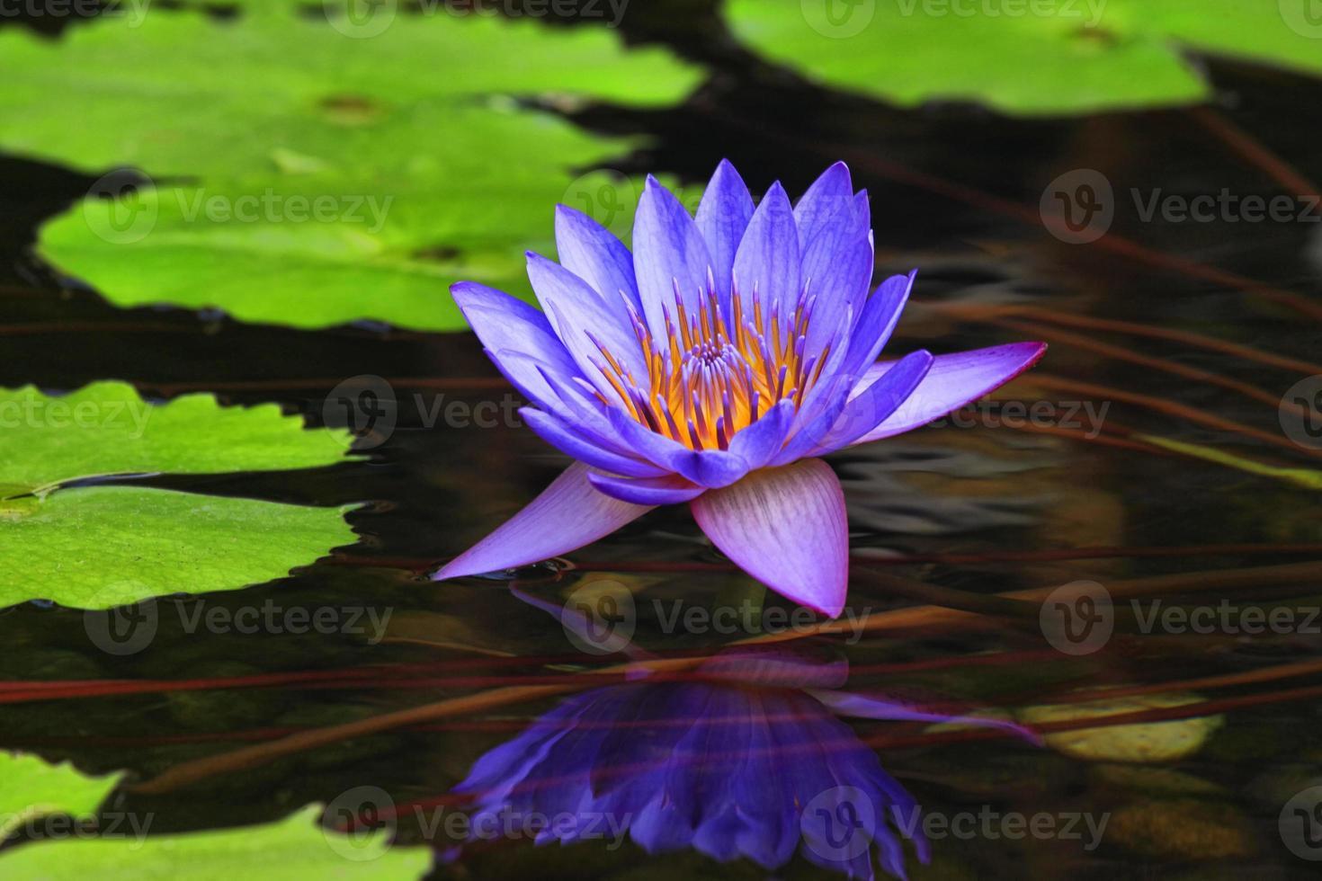 tropisk blomma foto