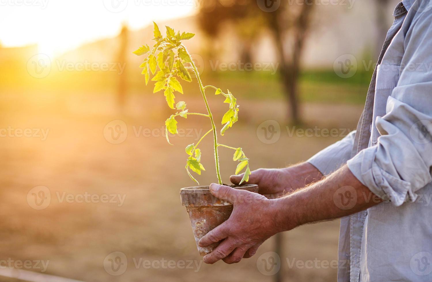 äldre man planterar plantor foto