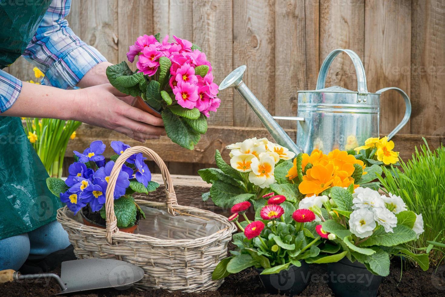 trädgårdsmästare planterar blommor foto