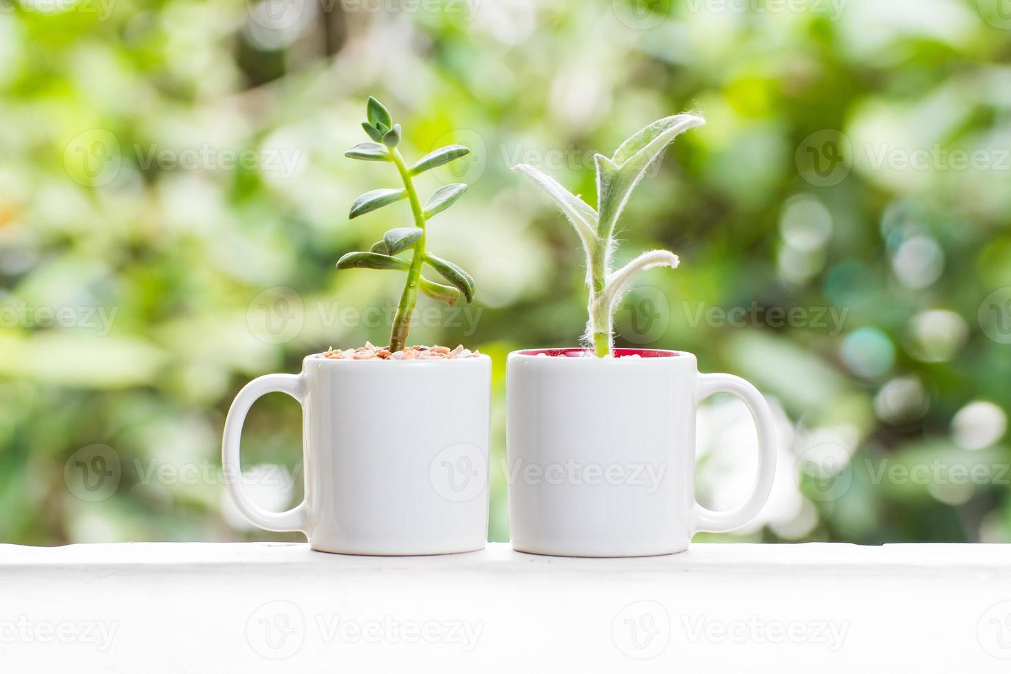 vacker kaktusblomma foto