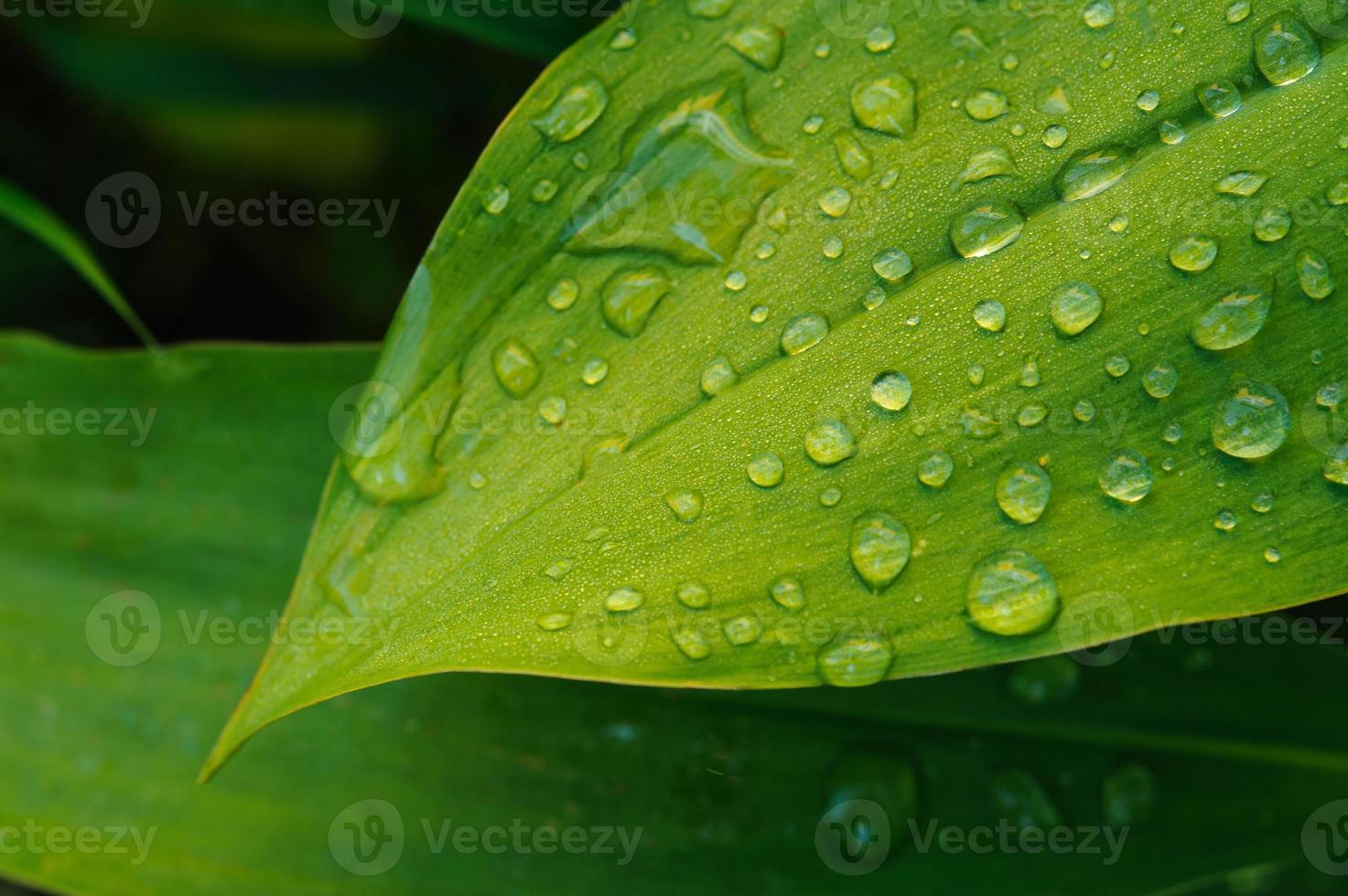 vått blad på nära håll foto
