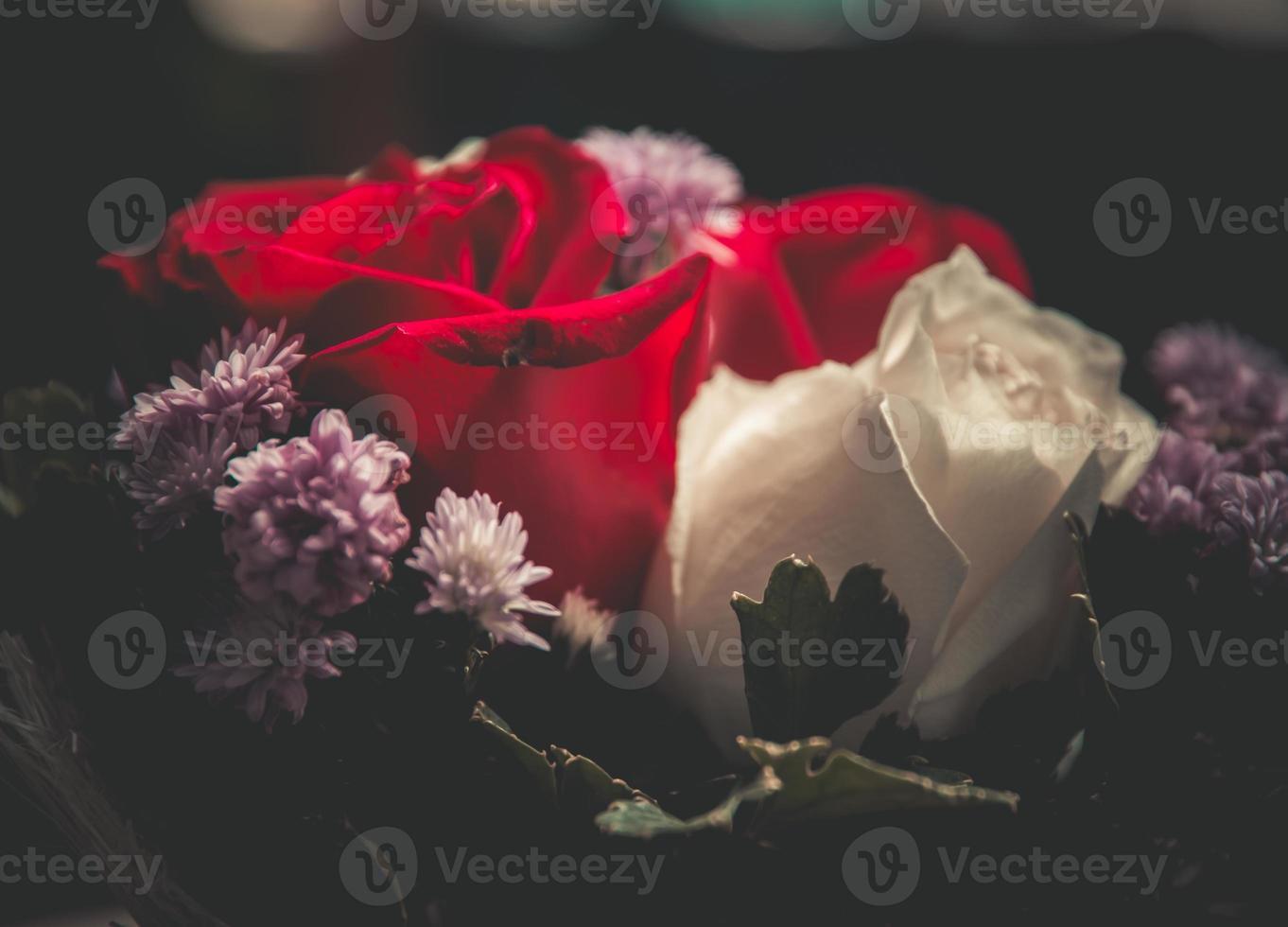 närbild av rosor. foto
