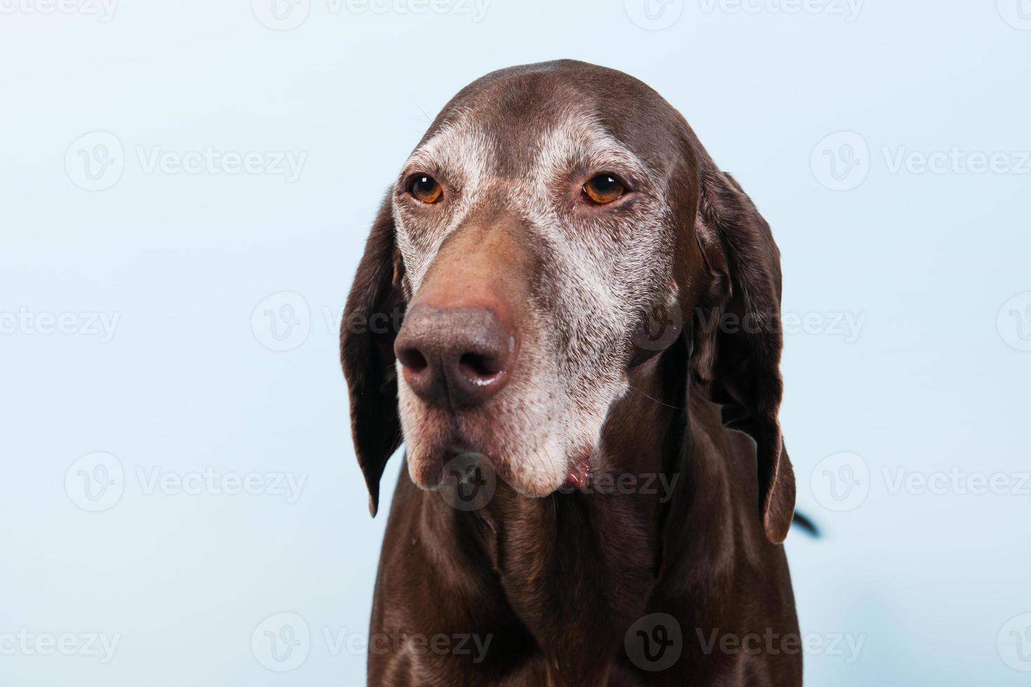 stående gammal hund foto