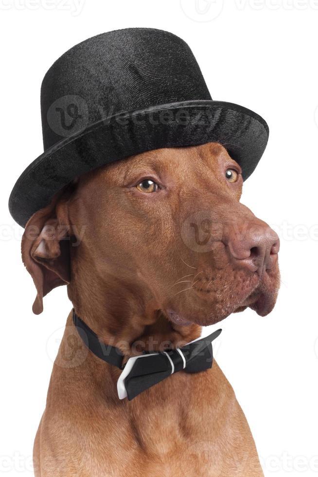 hund med hatt och bowtie foto