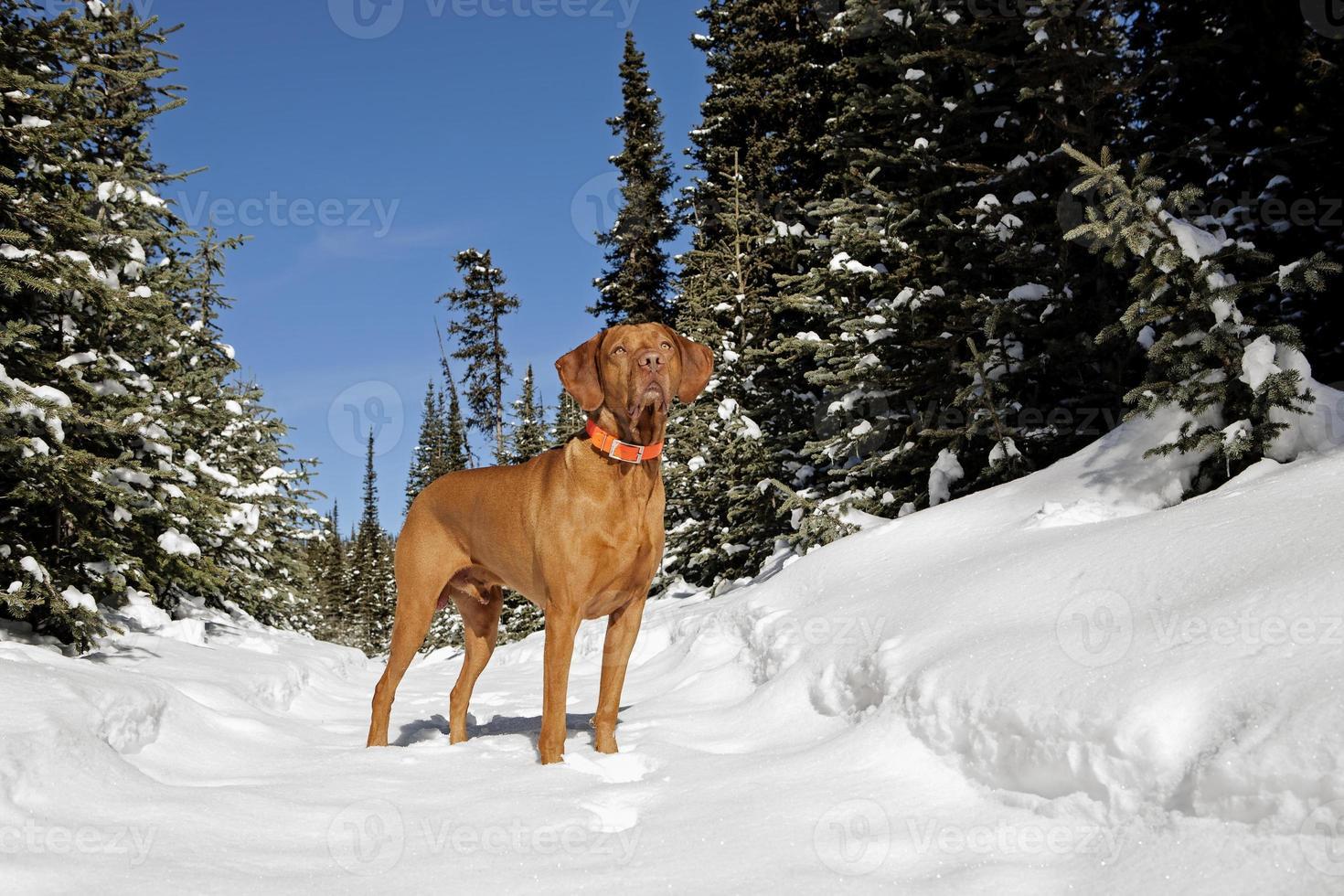 på vintern trail foto