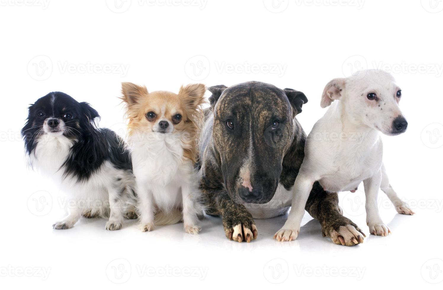 fyra hundar foto