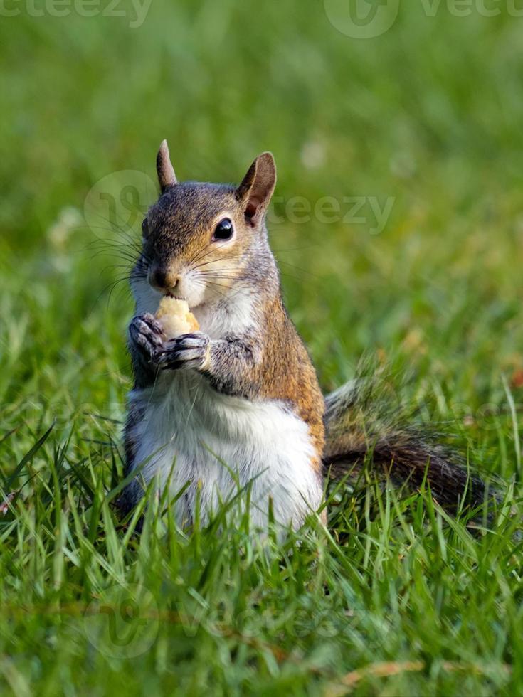 söt snacking ekorre foto