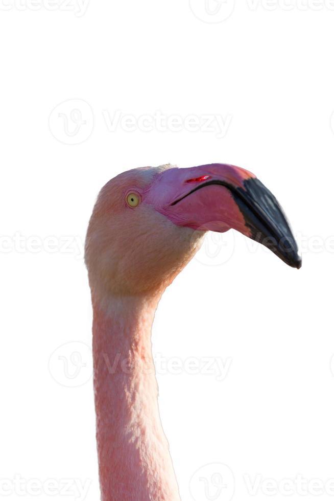 flamingo kopf foto