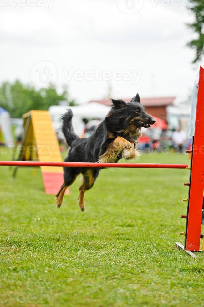hund agility foto