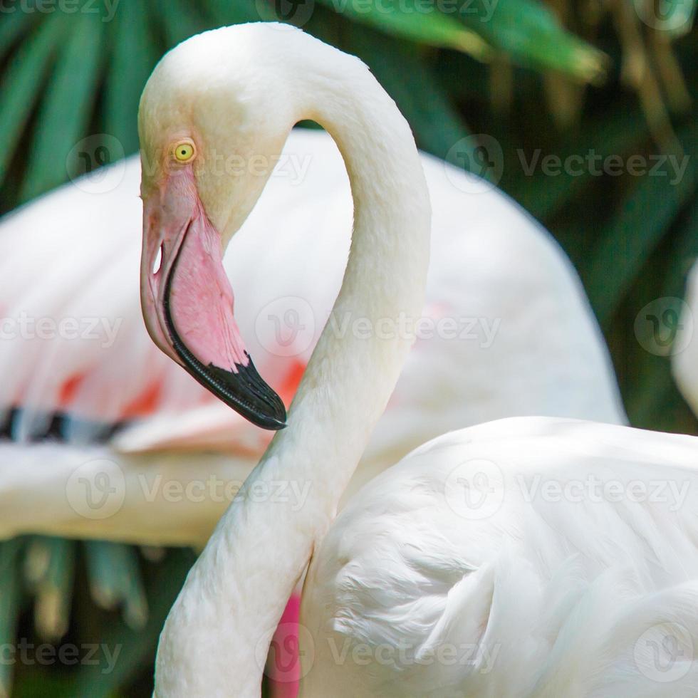 flamingo fågel. foto