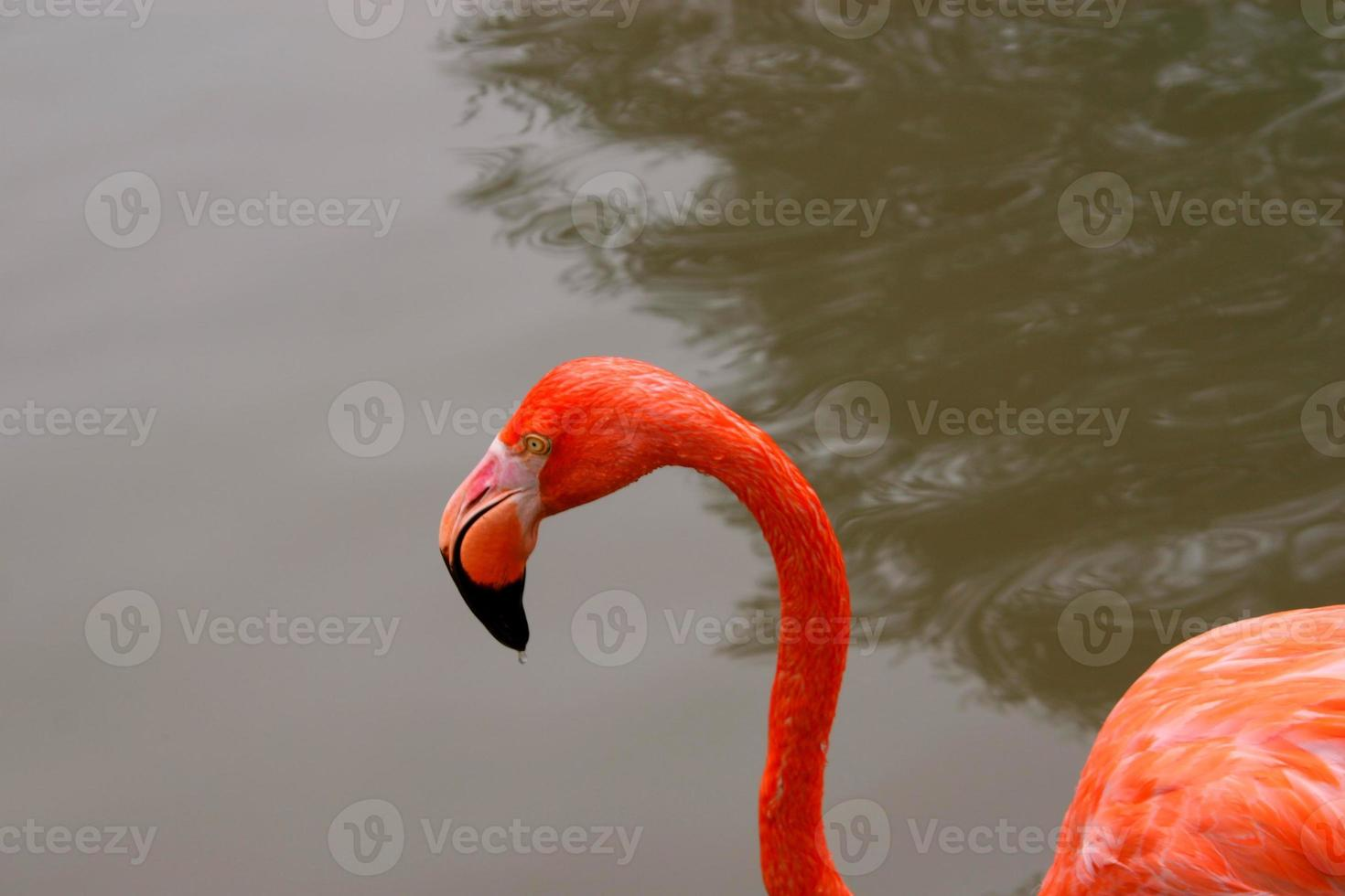 söt i rosa foto