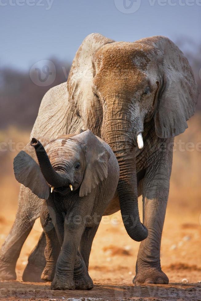 elefant baby foto