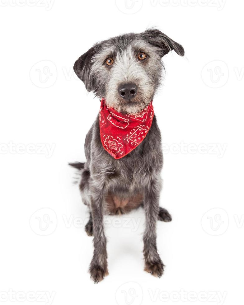 söt hund som bär röd bandana foto