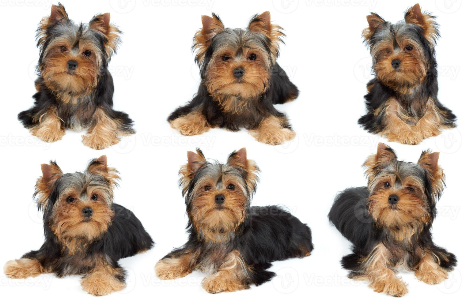 en fotosession av hunden foto