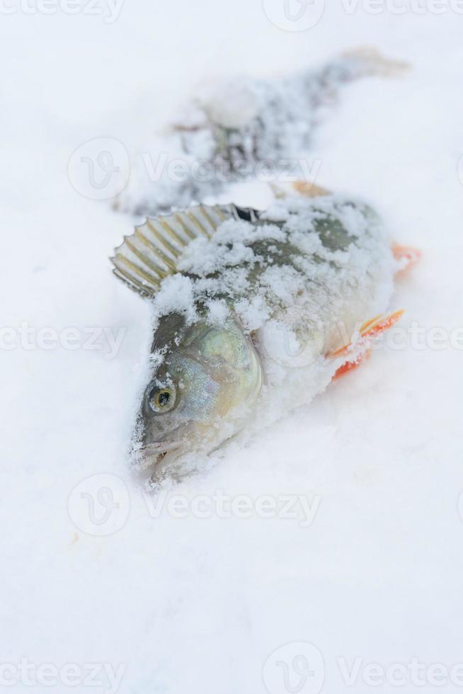 vinterfångst foto