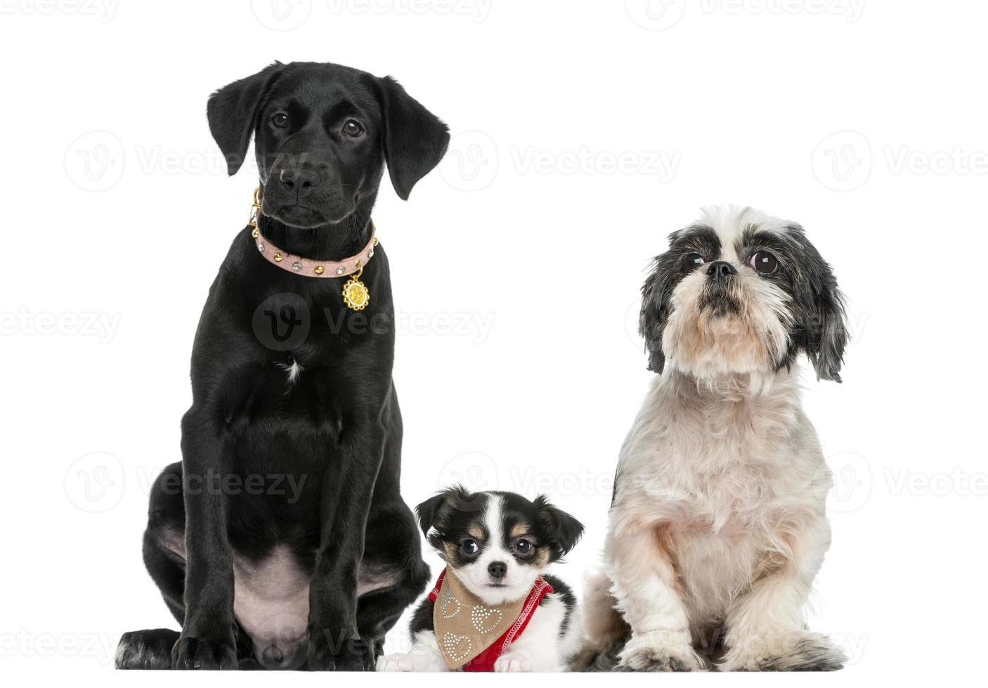 grupp hundar som sitter tillsammans, isolerad på vitt foto