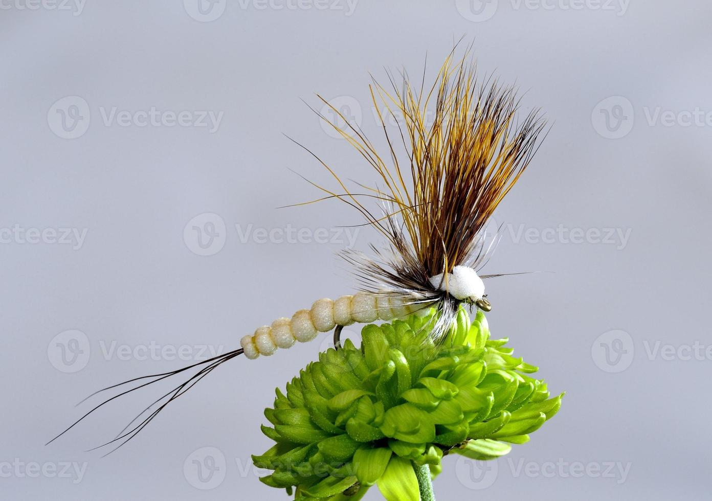 torrvingad öringfluga foto