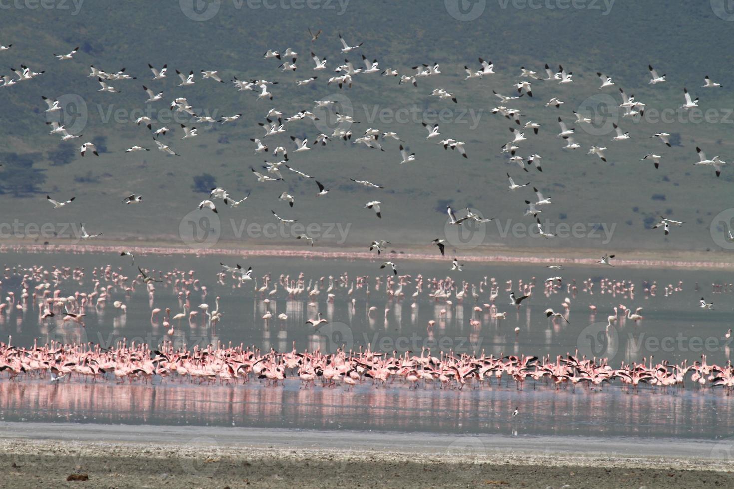 flockar av fåglar foto