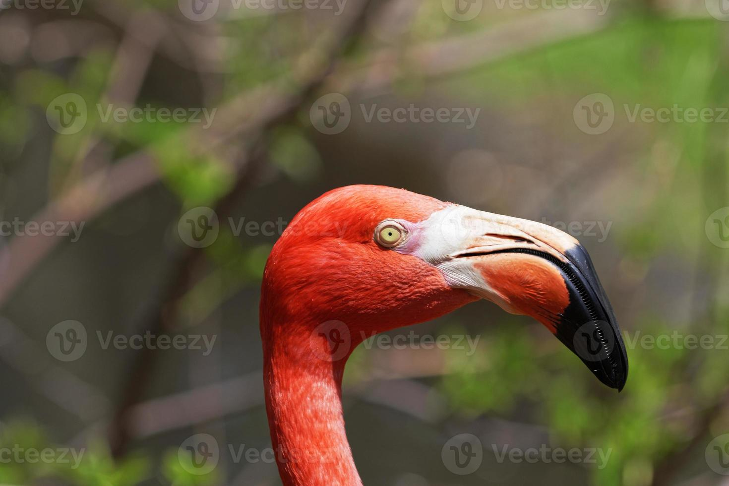 vacker rosa flamingo. foto