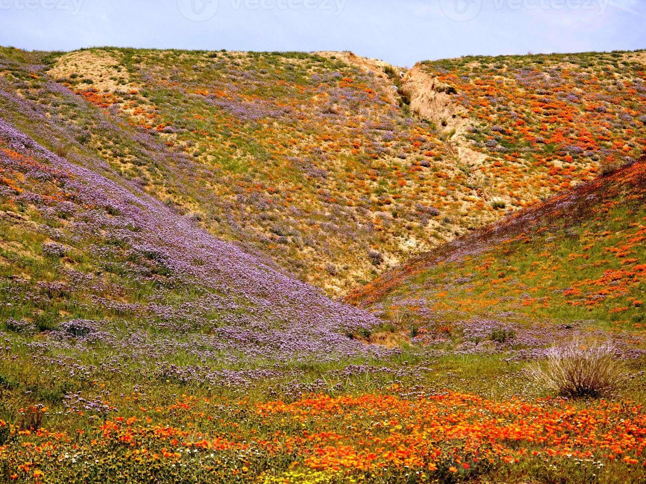 vildblommor på våren foto