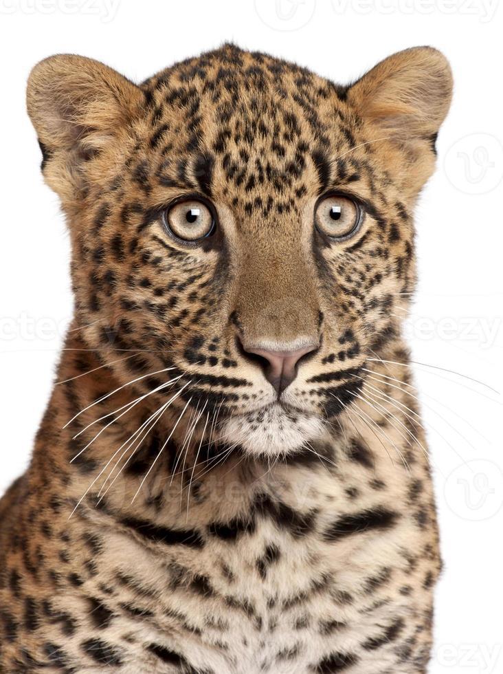 närbild av leopard, panthera pardus, 6 månader gammal foto