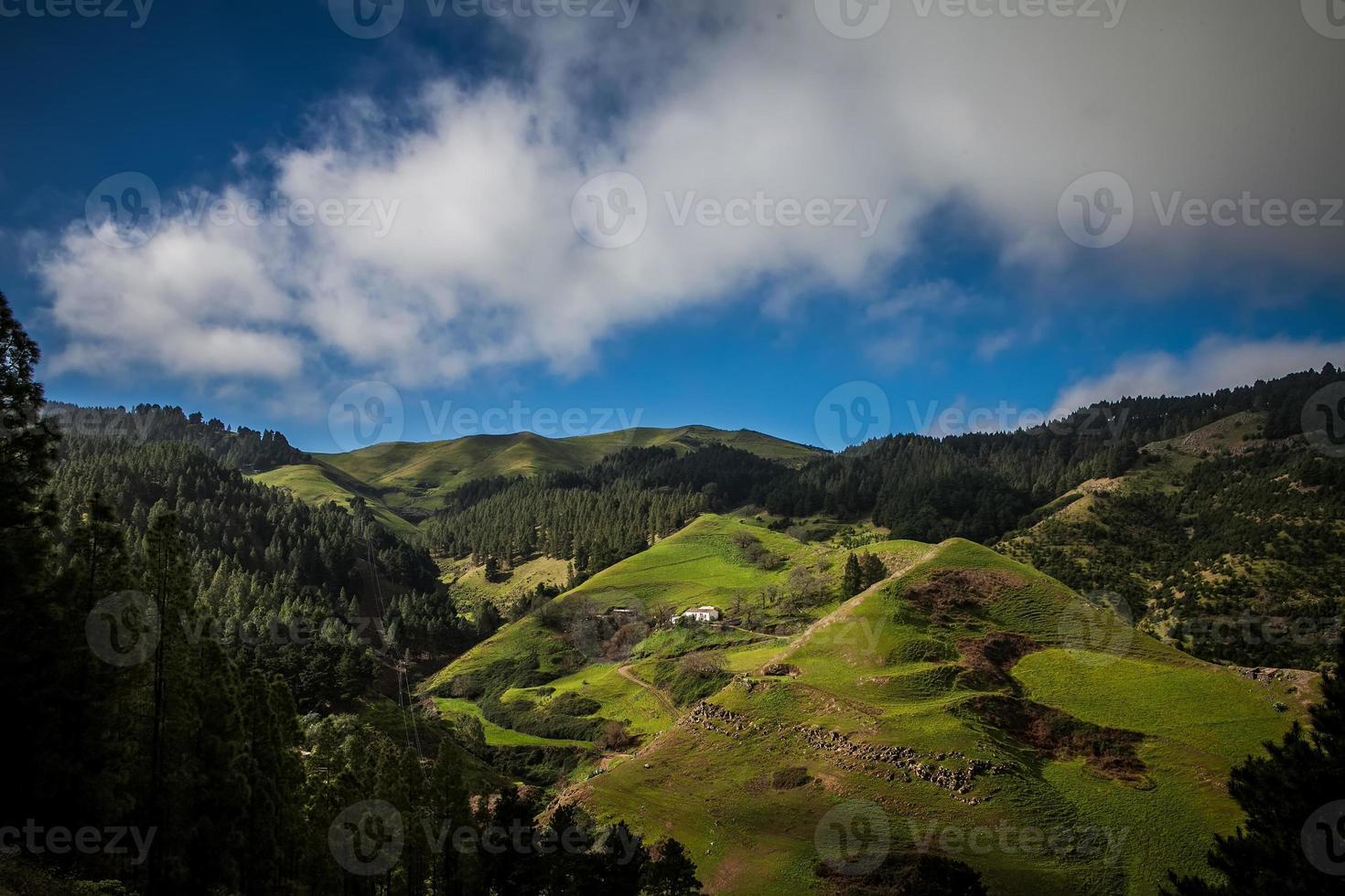 grön dal foto