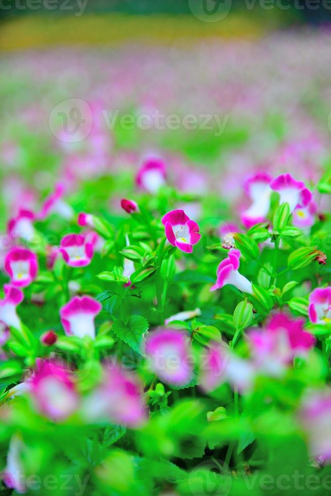 påfågel purpur glitter blommor foto
