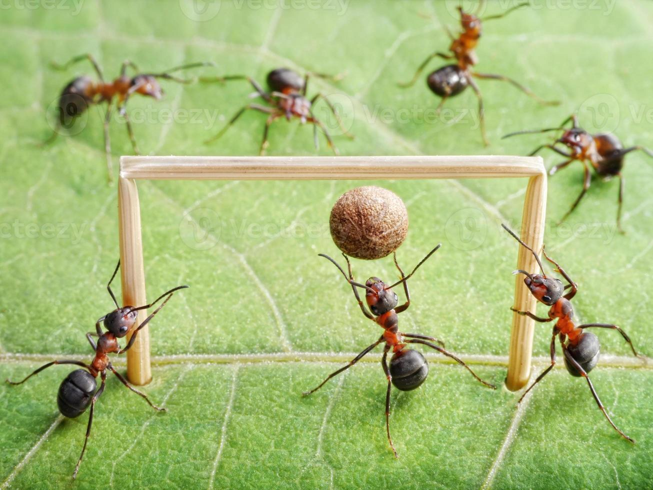 mål, myror spelar fotboll foto