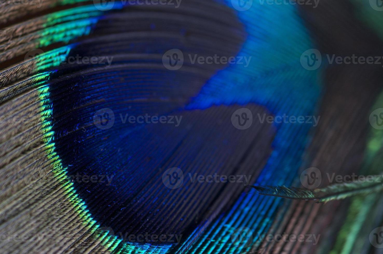 pluma abstracta pavo real foto