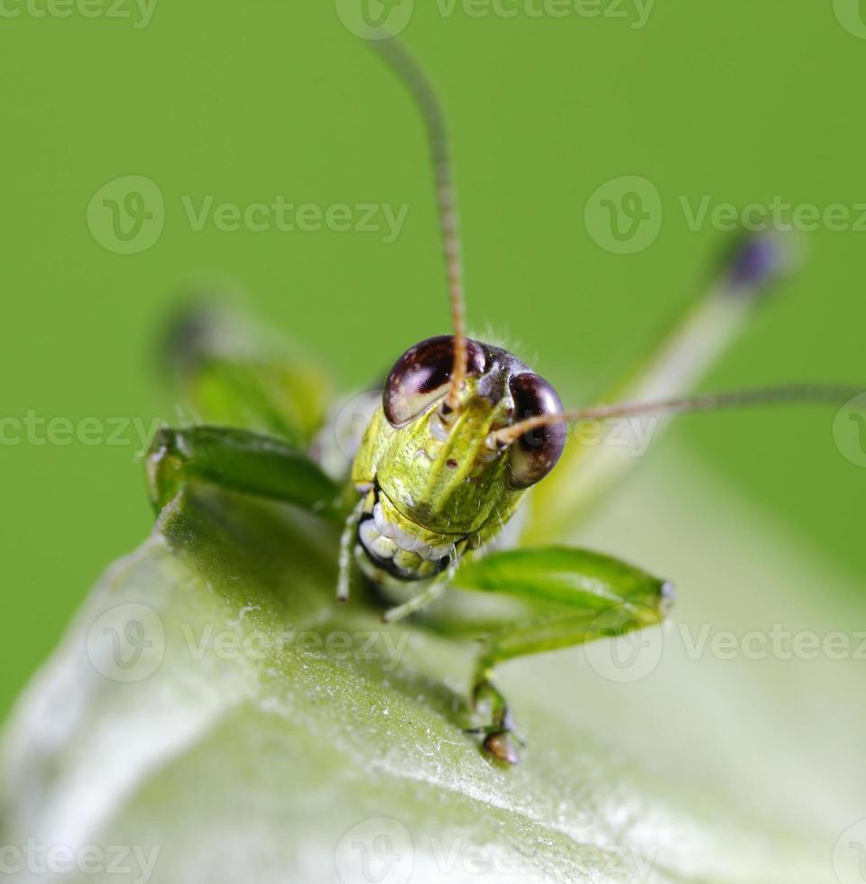 gräshoppa leende foto