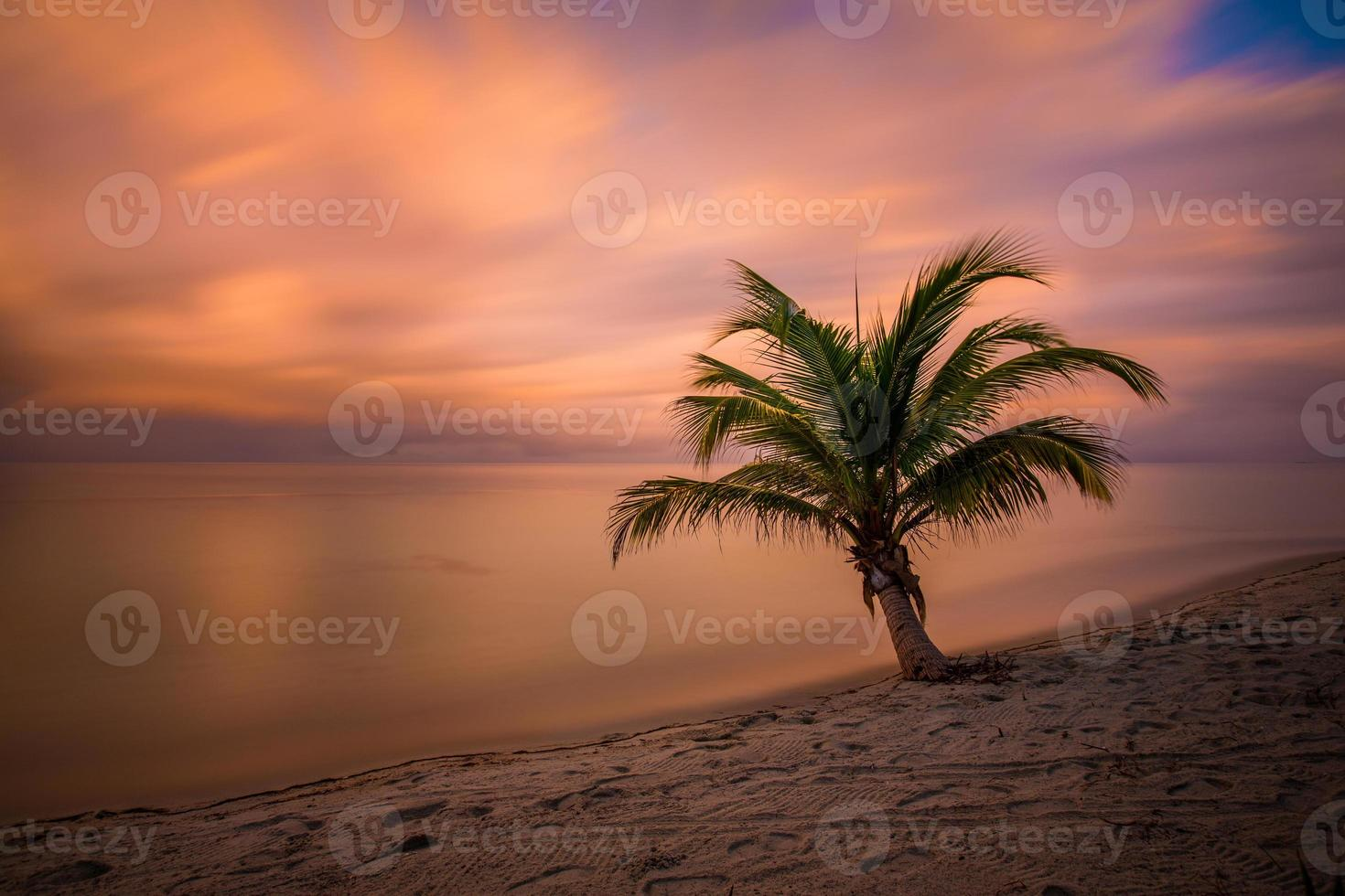 palm träd solnedgång foto