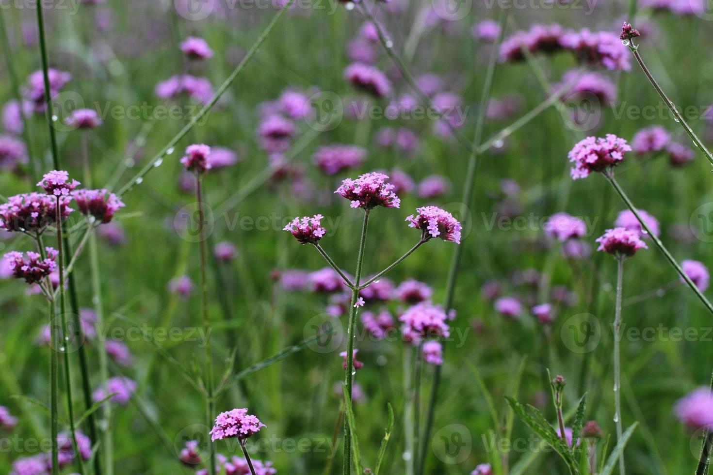 blomma foto