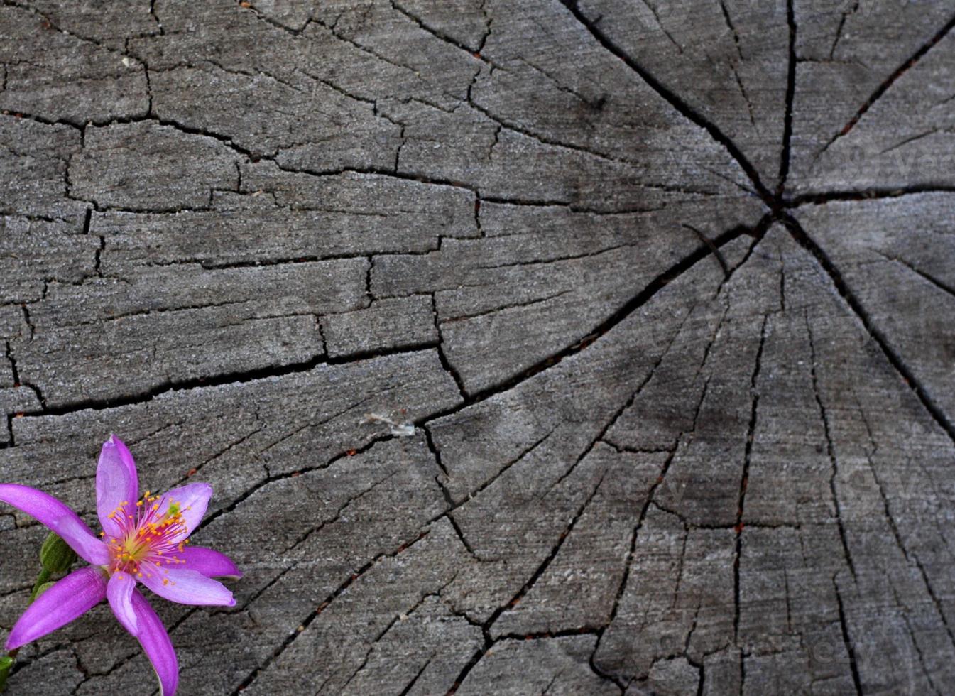 rosa blomma i hörn av stubben foto