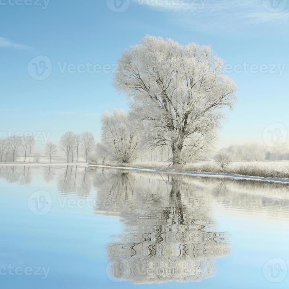 frostade träd mot en blå himmel foto