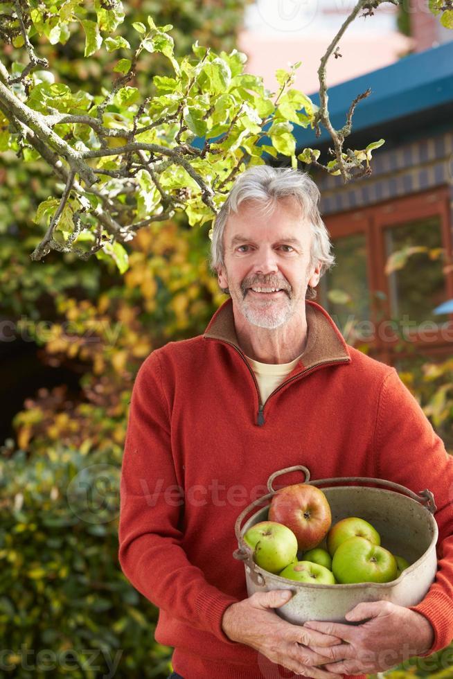 mogen man plockar äpplen från träd i trädgården foto