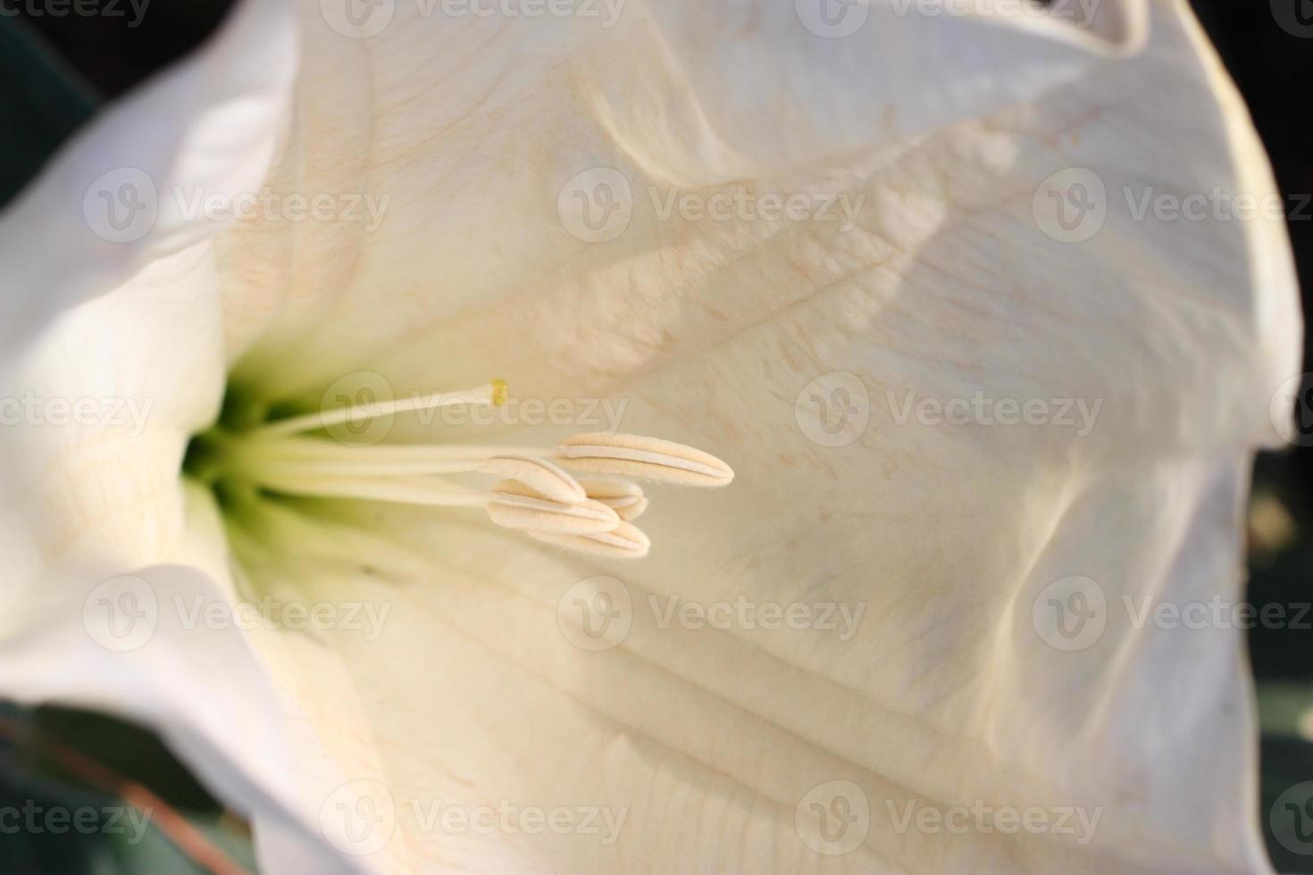 liten blomma foto